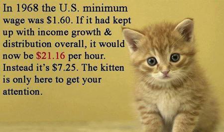 Minimum Wage Kitty